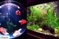 Ikan Akuarium